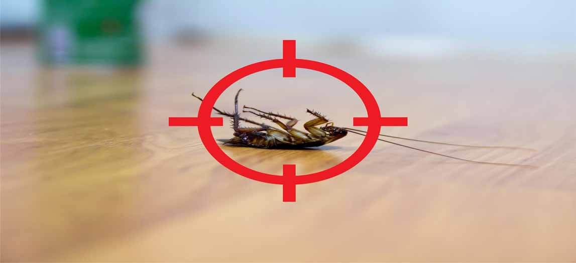 how to get rid of cockroaches in your home
