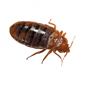 Best Pest Control For Bed Bugs In Dubai